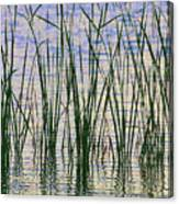 Cattails In The Lake Canvas Print