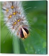 Catterpillar In Close Up 2 Canvas Print