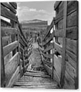 Cattle Chute Canvas Print