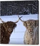 Cattle Cousins Canvas Print
