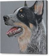 Cattle Dog Canvas Print