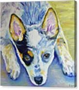 Cattle Dog Puppy Canvas Print