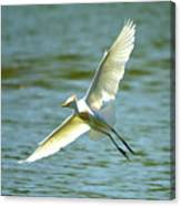 Cattle Egret Right Banking Turn - Digitalart Canvas Print