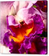 Cattleya IIi Canvas Print