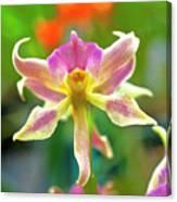 Caucaea Rhodosticta Orchid Canvas Print