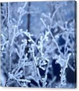 Caught In The Ice Canvas Print