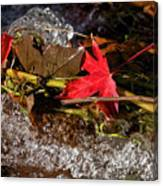 Caught In The Waterfall Canvas Print