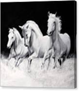 Cavalli Verticali Canvas Print