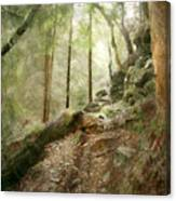 Cavern Walk ..... Canvas Print