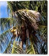 Cayman Palm Canvas Print