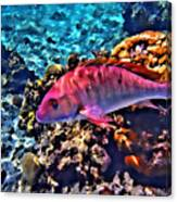 Cayman Snapper Canvas Print