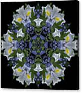 Ceanothus Iris Medley 2 Canvas Print