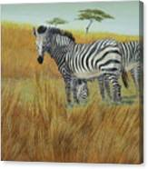Cebras  In  Rhino  Park Canvas Print