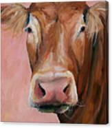 Cecilia The Cow Canvas Print