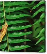 Cedar And Fern Canvas Print