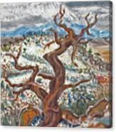 Cedar And Singing Bird Canvas Print