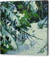 Cedar And Snow Canvas Print