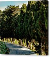 Cedar Curve Canvas Print