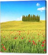 Cedar Grove And Poppies Canvas Print