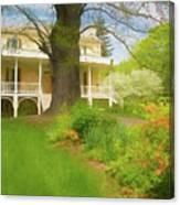 Cedar Grove In Spring Canvas Print