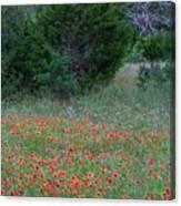Cedar Park Texas Indian Blanket Carpet Canvas Print