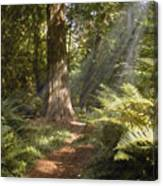 Cedar Path Canvas Print