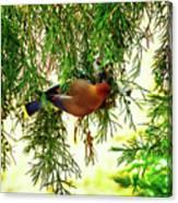 Cedar Waxwing Beauties 19 Canvas Print