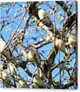 Cedar Waxwing Family Canvas Print