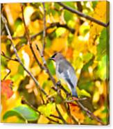 Cedar Waxwing In Autumn Leaves Canvas Print