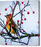 Cedar Waxwing Painting Canvas Print