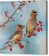 Cedar Waxwing Pair Canvas Print