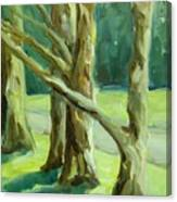 Cedars In Woodward Park Canvas Print