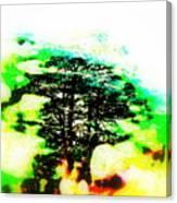 Cedars Of Lebanon  Canvas Print