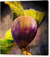Celeste Fig Canvas Print