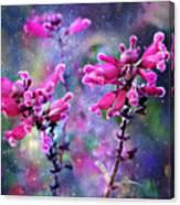 Celestial Blooms-2 Canvas Print