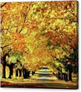 Cemetery Alley Canvas Print