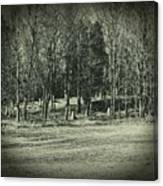 Cemetery In The Woods Canvas Print