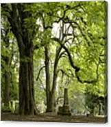 Cemetery  Trees 1 Canvas Print