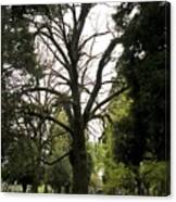 Cemetery Trees 2 Canvas Print