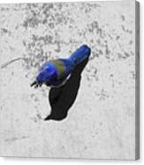 Center Of Attention- Scrub Jay Canvas Print