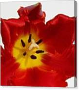 Center Of Tulip Canvas Print