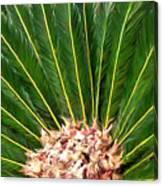 Centered Palm Canvas Print