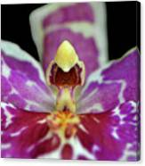 Centerpiece - Purple Orchid Macro Canvas Print