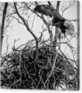Centerport Eagle 1 Canvas Print
