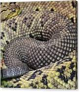 Central American Rattlesnakee Canvas Print