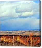 Central Coast Harvest Canvas Print