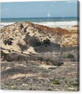 Central Coast Sand Dunes Canvas Print