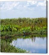 Central Florida Backwater Canvas Print