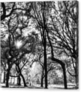 Central Park In Black And White Canvas Print