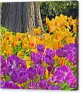 Central Park Tulip Display Canvas Print